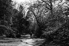 out for a walk... (@petra) Tags: petra monochrome blackandwhite garden park trees path man walking nikond600 wisley surrey england uk
