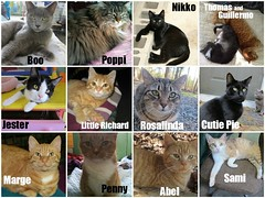 March adoptions (Goathouse Refuge) Tags: cats jester thomas guillermo boo penny cutiepie nikko marge abel adopted sami poppi littlerichard rosalinda goathouse picmonkey:app=editor