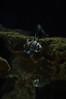 IMGP3206.jpg (MEATY IDEAS) Tags: fish night vancouver aquarium december pentax around vancouveraquarium k7 2011 pentaxk7