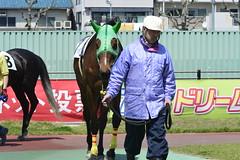 20130405-_DSC5293 (Fomal Haut) Tags: horse japan nikon nagoya 80400mm d4   14teleconverter  d800e