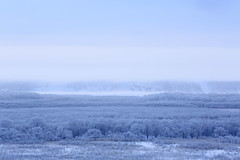 my favorit scene 7 (cate) Tags: winter snow cold tree river landscape hokkaido view foggy earlymorning     kushiromarsh