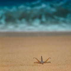 I'll take the wild side please~ (~mimo~) Tags: ocean trip travel sea holiday color water photography seaside sand asia starfish wave shore malaysia penang hcs thewildside mimokhair
