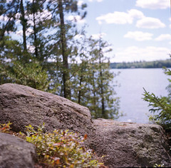 By The Shore (dspina13) Tags: lake 120 tlr nature woods adirondacks scan 124 portra yashica imacon