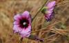 Flowers 86