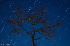 Spring (Deana Steere) Tags: longexposure sky tree silhouette night canon dark naked stars star long exposure bare trail vignette startrail canoneos5dmarkii deanasteere