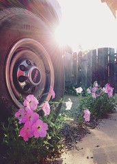 Close Call (beaubright) Tags: flowers arizona sun sunlight car wheel photography tire az driveway sunray sierravista afterlight iphoneography vscocam uploaded:by=flickrmobile flickriosapp:filter=nofilter
