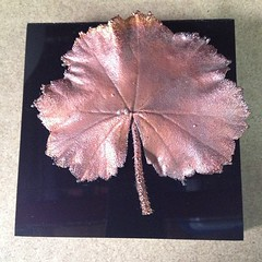 WALL MOUNTED COPPER LEAF (electroformingart) Tags: black wall leaf acrylic mounted copper electroformed iphoneography instagramapp