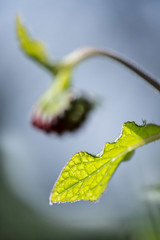 The green of young leaves is irresistable (Gies!) Tags: