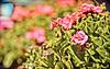 Good Morning (A Great Capture) Tags: morning flowers canada flower nature whistler spring village bc good britishcolumbia westcoast springtime ald ash2276 seenin ashleyduffus vancouver2010c wwwashleysphotoscom