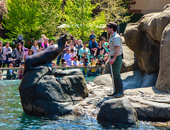 Just give me fish! (dandimar) Tags: bear park red sea snow animals zoo penguin monkey panda turtle central lion parrot tricks polar parot