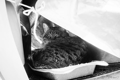 Today's Cat@2013-04-29 (masatsu) Tags: bw cat canon catspotting thebiggestgroupwithonlycats powershots95