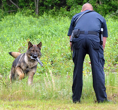 DogSchool9 (prophoto2008) Tags: usa dog training nc police northcarolina wilson wilsoncounty k9