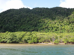 Lower reaches of the Urauchi River (jackosan) Tags: japan forest okinawa mangroves iriomote yaeyamaislands urauchiriver