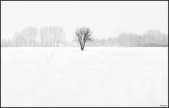 lost & alone [1] (tomba3012) Tags: winter light sky bw white snow abstract cold tree nature munich landscape lowlight loneliness olympus silence minimalism lowkey omd em5 mirrorless