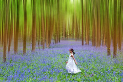 The Enchanted Wood. (Andy Bracey -) Tags: family blur bluebells woods wand fairy stevenage enchanted shhhhh flowerfairy bracey theenchantedwood bestcapturesaoi pryorswood andybracey