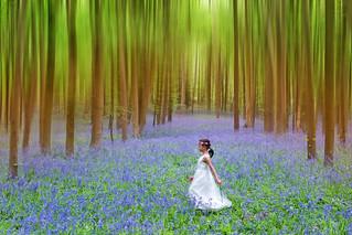 The Enchanted Wood.