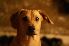 Napoleon (SnapApple) Tags: dog dogs napoleon