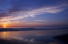 NSB Sunrise (TaranRampersad) Tags: sunrise beach newsmyrnabeach florida atlantic ocean seaside oceanside