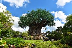 Tree of Life (KrisVlad) Tags: tree life mother nature beautiful print disney world florida post card