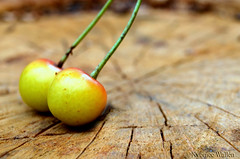 Falling Together (nyomee wallen) Tags: cherry fallingtogether falling together nature