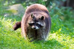 _FAN3933.jpg (Flemming Andersen) Tags: zoo animal neumnster schleswigholstein germany de