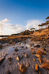 Goldern hour at Billy Light's Point (Trace Connolly) Tags: australia australian australiasouthaustralia beach beaches blue canon coast cloudsstormssunsetssunrises cliffs environmentalphotography eyrepeninsula portlincoln foreshore golden gold goldenhour hiking landscape light nature naturephotography ocean orange peninsula rocks rockyshore red seascape southaustralia sigma seascene sunrise sigma1020mm canon40d trees tree water