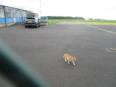 Making a Run For Landside (cessna152towser) Tags: cat overfinch rangerover carlisle lloyd