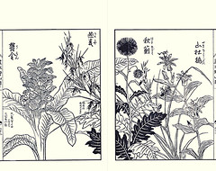 Indian-saffron, oat, thistle and toad lily (Japanese Flower and Bird Art) Tags: flower indiansaffron curcuma domestica zingiberaceae oat avena sativa poaceae thistle cirsium asteraceae toad lily tricyrtis macropoda liliaceae yasukuni tachibana kano woodblock picture book japan japanese art readercollection