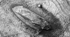 PSP_010093_1740 (UAHiRISE) Tags: mars nasa jpl mro universityofarizona landscape uofa ua science geology