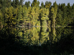 Verde Duero (Luicabe) Tags: ngc agua airelibre cabello enazamorado exterior luicabe luis naturaleza paisaje planta reflejo roduero yarat1 zamora rbol