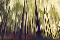 In motion forest (Pavel Cervenka Photographer) Tags: forest motion blur abstract simple minimal interesting nature autumn morning tree lines pavel cervenka czech republic creative different fall hiking wide outdoor move 2470 bokeh