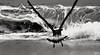 Escapada (ZAP.M) Tags: playa gaviotas orilla mar naturaleza nature plage beach zapm mpazdelcrro españa andalucía flikcr nikon nikon5300 cadiz bolonia
