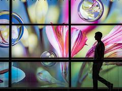Flower dreams (martina.stang) Tags: flower window silhouette people street art illuminated