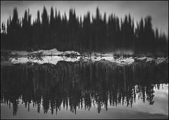 The Upside Down (nl_photo) Tags: tree treeline shoreline lake water bw blackandwhite blackwhite monochrome colorado alpine fujix fujifilm fujixseries rollinsville rollins pass upsidedown