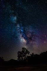 Diablo Sky 2 (glen cam) Tags: stars milkyway longexposure astrophotography trees dark
