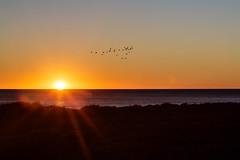 Nightflight (S_Weidbo) Tags: solnedgngar hsten16 ljet sundown swedishnature sweden canon24105mmf4 canon5dmk3