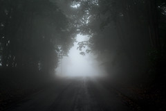 Enter the Void (KanteTelemaque) Tags: brouillard mist vide void cold froid humide moist layers