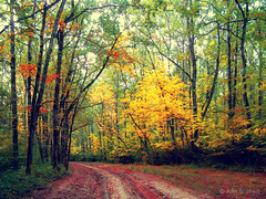 (Alin B.) Tags: alinbrotea nature autum fall toamna september october forest tree woods ray sun rusty rust