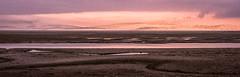 Low flying (cottagearts123) Tags: snettisham murmuration wildlife knots sunset