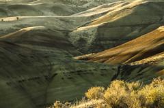 Paint and sage (Helen Croy) Tags: oregon paintedhills sagebrush sunrise sunlight