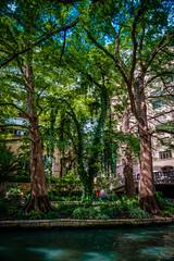 SanAntonio_236 (allen ramlow) Tags: san antonio riverwalk texas river trees day sony a6300 city