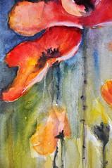 DSC_0111 (gracielahellstrom) Tags: watercolour poppies aquarelle acuarela flores red rojo