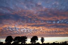 Mackerel Sky (Spenny Manor) Tags: mackerel evening ireland claremorris sunset