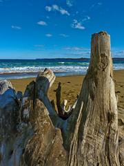 Bleached (elphweb) Tags: falsehdr fhdr australia beach seaside ocean driftwood coastal