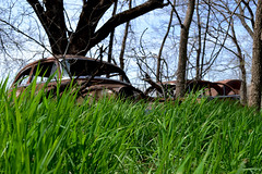 Diamond In The Rough (AshleyHockingPhotography) Tags: old nature grass car vintage automobile rusty down run diamond rough corroded