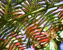Sprin fern (Pickford Studios) Tags: pickfordstudios pickfordstudiosltd highquality gift print quality birthday wedding anniversary christmas present abstract modern contemporary special presents photograph photographs photos photo anniversarygift anniversarygifts anniversarypresent anniversarypresents weddinggift weddinggifts weddingpresent weddingpresents birthdaygift birthdaygifts birthdaypresent birthdaypresents interior interiordesign interiordesigners hotel restaurant office wallart design designers interiordesigns christmasgift christmasgifts christmaspresent christmaspresents