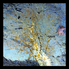 Reflets-2013-01 (Coquelet) Tags: trees reflections pages arbre reflets formes flaques photosperso