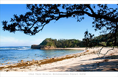 One Tree Beach Post Card 1 (caralan393) Tags: beach coast sand postcard