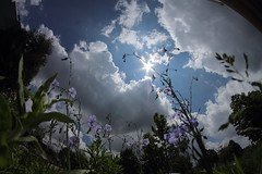 Dreaming in the Flowers (Dan Constien) Tags: blue wild plants cloud sun sunlight fish plant eye wisconsin clouds eos rebel spring nice day purple sunny fisheye madison t3 wildflower 8mm wi madisonwisconsin niceday 8mmfisheye canoneosrebelt3 8mmbower