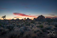 Joshua Tree Sunset (Mike Ver Sprill - Milky Way Mike) Tags: joshuatree desert sunset joshua tree panorama pano mike michael ver sprill versprill mv cali california nikon d800 1424 landscape sky earth amazing trees mountains gorgeous travel explore best photography every greatest trails camping camp peter lik style large format printing 29 palms hidden valley exposure outdoor sunrise beautiful bushes brush summer june 2016 plant field flintstones fraggle rock dreams